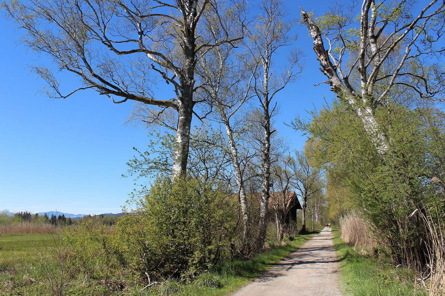 hiking path at Benediktbeuern moor